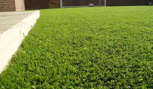 Artificial Grass Example